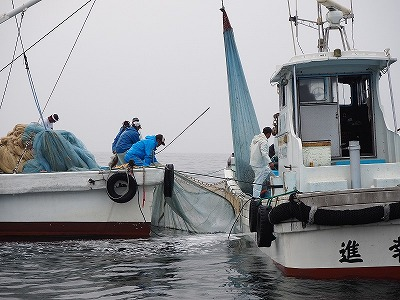 第2回イリコ漁を見に行こう!