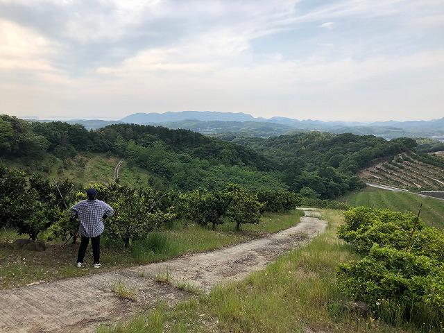 予約で完売!香川の里山に実るこだわりの柑橘、専業主婦が農家4代目を継ぐ