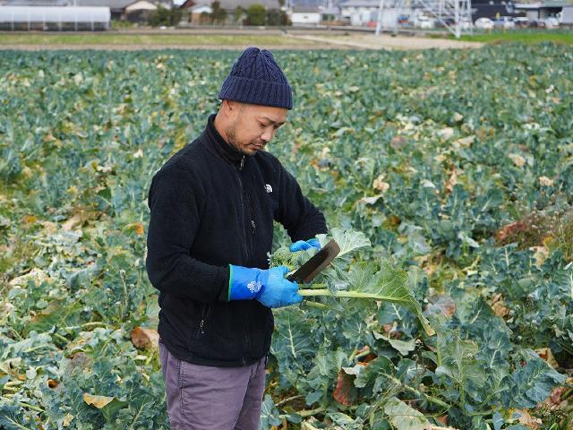 ブロッコリー農家 松尾和也さんの圃場にお邪魔しました!