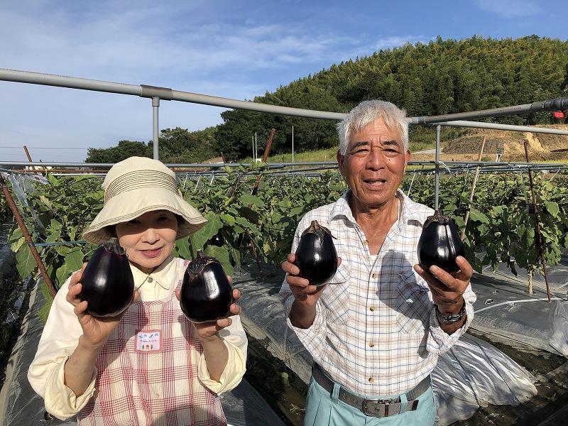 """猛暑においしい郷土野菜 """"三豊ナス"""""""