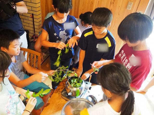 【高知県梼原町:最終日】お茶の葉どーれだ!?|じぶんで考える食の学校in高知・梼原町